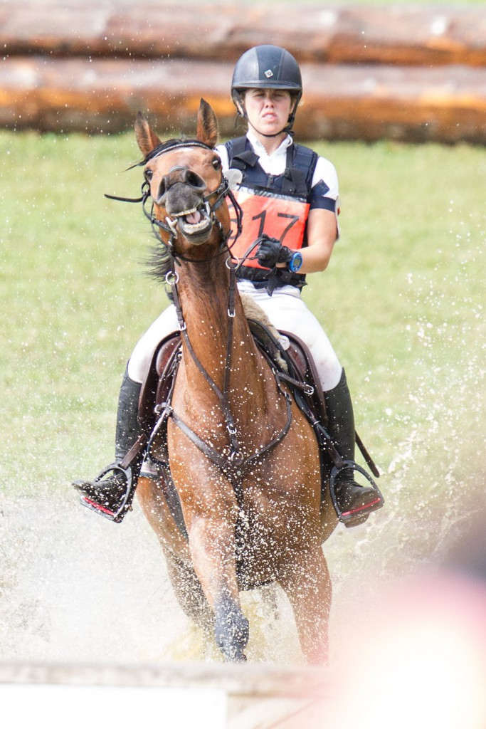 Häst och ryttare med fokus på uppgiften